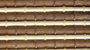 bambus_BC10
