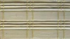 bambus_BC12